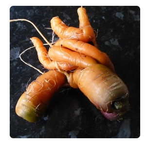 A puzzle carrot, that slots together perfectly. Fun for all the family